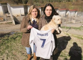Cristiano Ronaldo saves dog shelter from closure